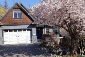 rockridge cherry tree in bloom